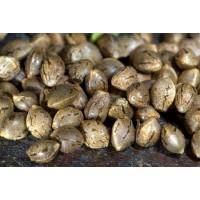 Елітне насіння конопель