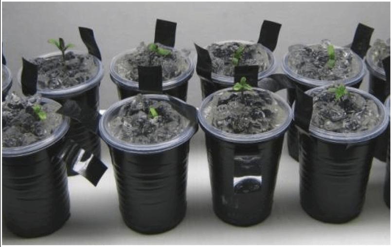Як проростити насіння в ґрунті