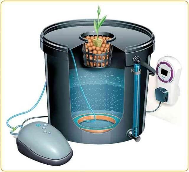 Особливості та підготовка до вирощування в воді
